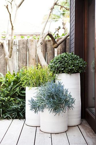 Crea tu propio jardínGourmet