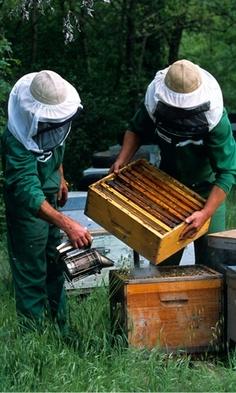 La miel, buen aliado de losantibióticos