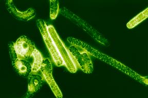 Descubierta la causa de la pandemia más letal de la historia, que podríarepetirse