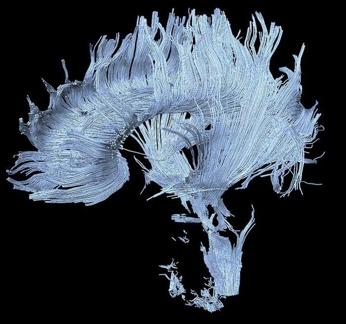 Nuevos desarrollos en el enfoque neurocientífico de lamemoria
