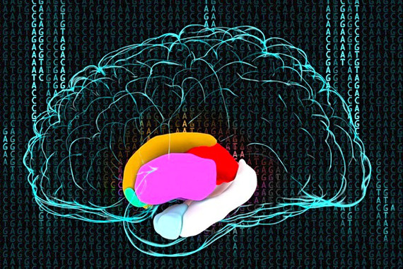 Descubren-variaciones-geneticas-asociadas-a-cambios-en-el-cerebro-de-miles-de-personas_image_380